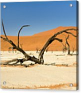 Deadvlei With Tree Acrylic Print