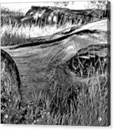 Deadwood On Cherry Creek Trail 2 Acrylic Print