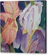 Dear Iris Acrylic Print