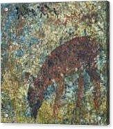 Dear Or Deer Being Hunted Acrylic Print