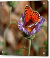 Death Valley Butterfly Acrylic Print