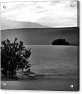 Death Valley Shrubs Acrylic Print