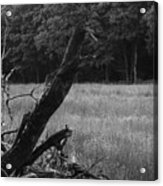 Debris Black And White Acrylic Print