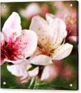 Decadent Spring Delight Acrylic Print