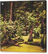 Decayed Vegetation - Run Swamp, North Carolina Acrylic Print