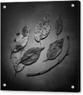 Decaying Leaves Acrylic Print