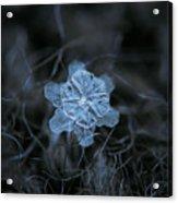 December 18 2015 - Snowflake 2 Acrylic Print by Alexey Kljatov
