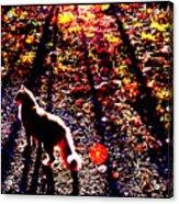December Walk In The Blue Ridge Acrylic Print