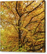 Deciduous Forest In The Autumn Acrylic Print