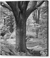 Deciduous Tree Ir Acrylic Print