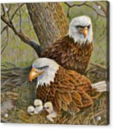Decorah Eagle Family Acrylic Print