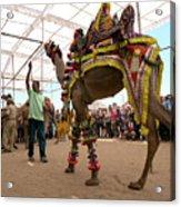 Decorated Camel Pushkar Acrylic Print