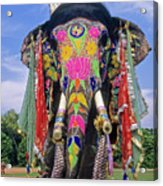 Decorated Indian Elephant Acrylic Print