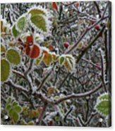 Decorated With Leaves Acrylic Print