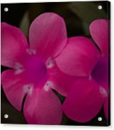 Decorative Floral A62917 Acrylic Print