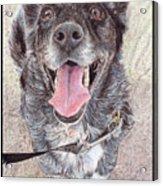 Dedicated Dog Acrylic Print