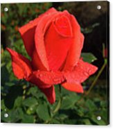 Dedicated To All Women In The International Women's Day Acrylic Print