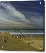 Dee Why Beach Sydney Acrylic Print