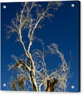 Deep Blue White Tree Acrylic Print