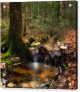 Deep Forest Creek Acrylic Print