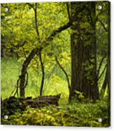 Deep Forest Scenic Acrylic Print