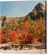 Deep In Mckittrick Canyon - Lost Maples And Ponderosa Pines Against Backdrop Of Guadalupe Mountains  Acrylic Print