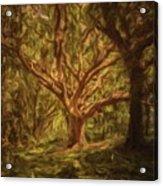 Deep In Sherwood Acrylic Print