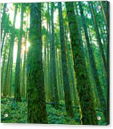 Deep In The Forest Acrylic Print