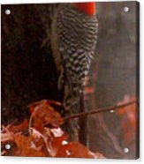 Deep In The Forest Woodpecker Acrylic Print