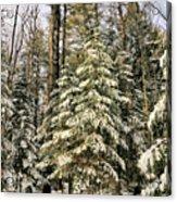 Deep In The Maine Woods Acrylic Print
