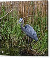 Deep In The Swamps Acrylic Print