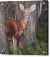 Deep In The Wood Acrylic Print