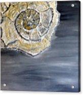 Deep Ocean Seashell Acrylic Print by Leslye Miller