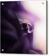 Deep Purple Velvet Acrylic Print