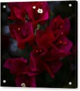 Deep Scarlet Glabra Acrylic Print