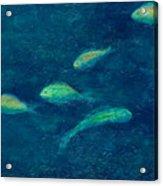 Deep Swim Acrylic Print