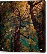 Deep Trees Acrylic Print