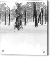 Deep Winter II Acrylic Print
