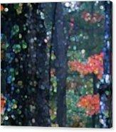 Deep Woods Mystery Acrylic Print
