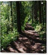 Deep Woods Road Acrylic Print