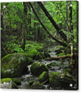 Deep Woods Stream 3 Acrylic Print