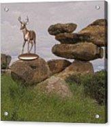 Deer 11 Acrylic Print