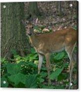 Deer 7414 Acrylic Print