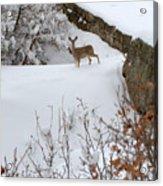 Deer At Castlewood Canyon Acrylic Print