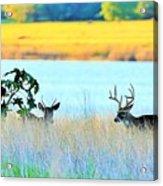 Deer At Sunset Acrylic Print