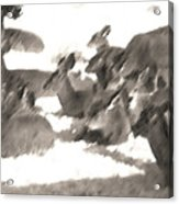 Deer Bedding Down Acrylic Print