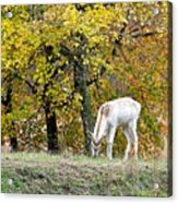 Deer Boy Acrylic Print