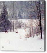 Deer By The Forest Db Acrylic Print