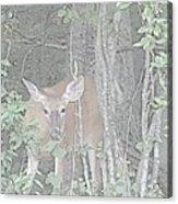Deer By The Tree Line Acrylic Print