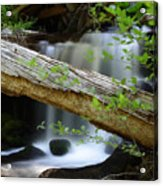 Deer Creek 13 Acrylic Print